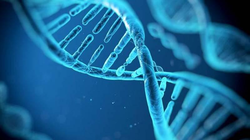 Harvard ADN CRISPR