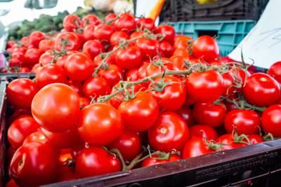 Japón empieza a comercializar el primer tomate con genoma editado en el mundo